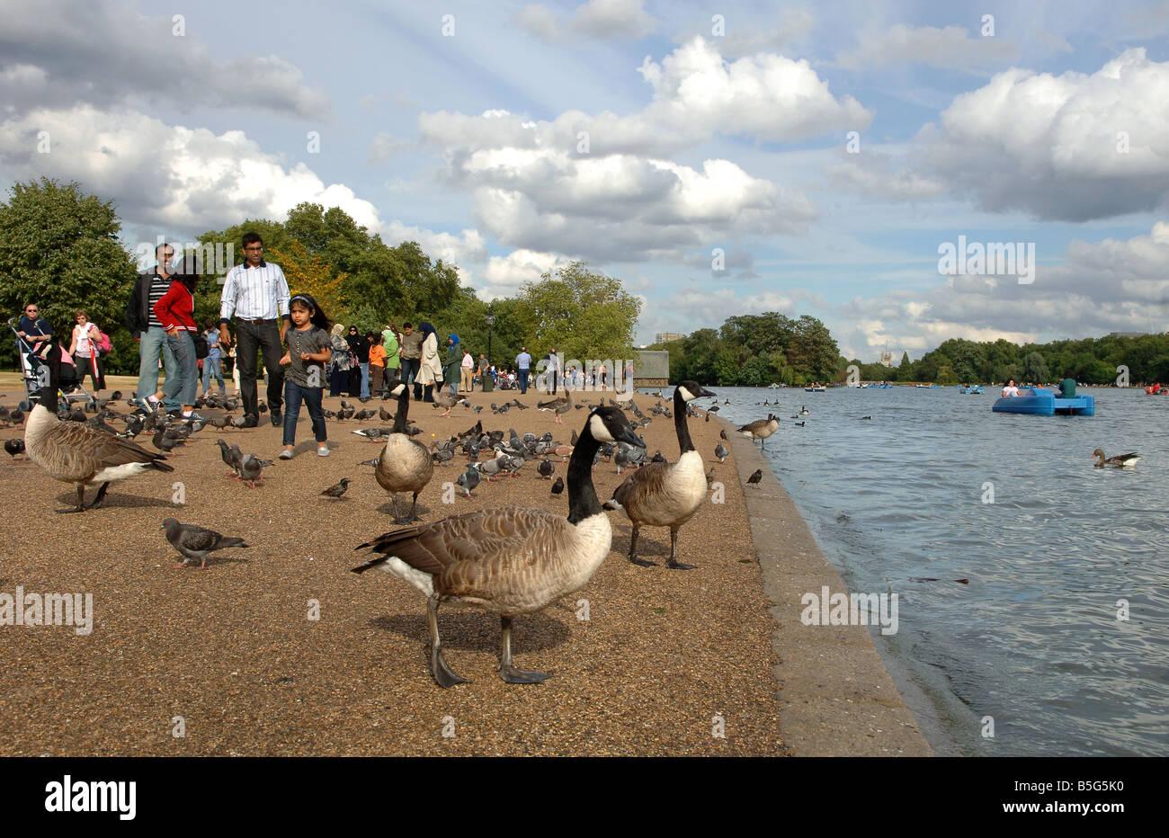 Serpentine Lake London Groß Britannien 2008 Serpentine Lake London Great Britain 2008 - Stock Image