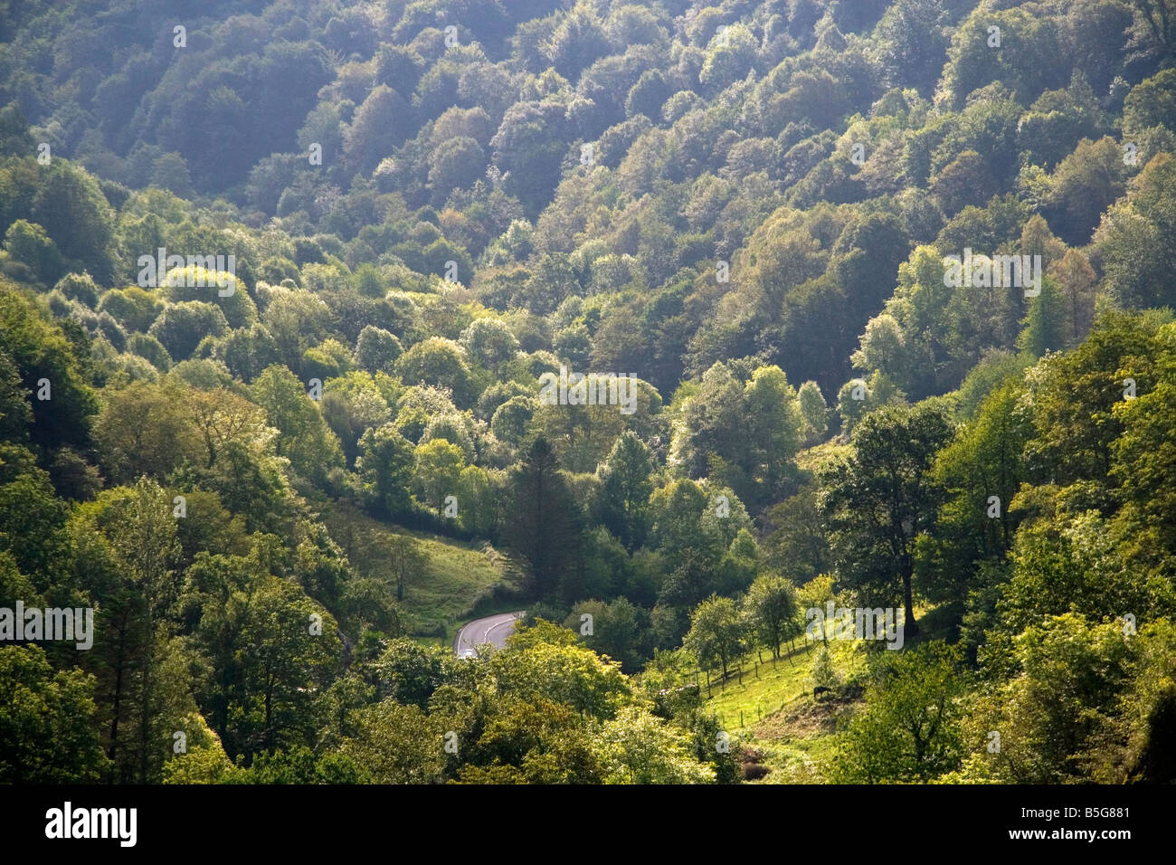 Forested Picos de Europa mountains at Covadonga Asturias northwestern Spain - Stock Image