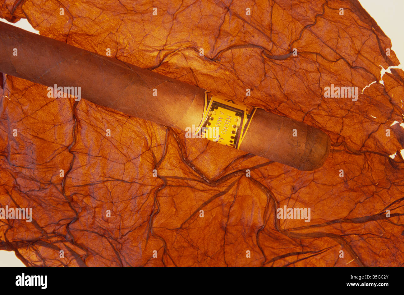 tobacco leaf and cigar - Stock Image