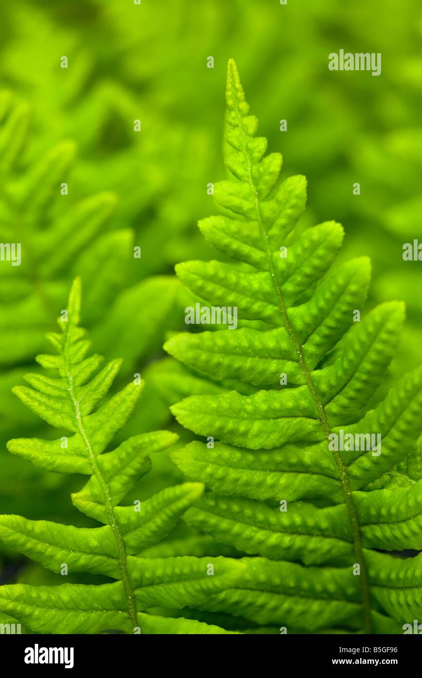 Ferns Green Forest Floor Coastal Ferns U S Plants