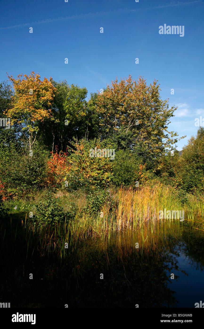Gillespie Park nature reserve, Highbury, London - Stock Image