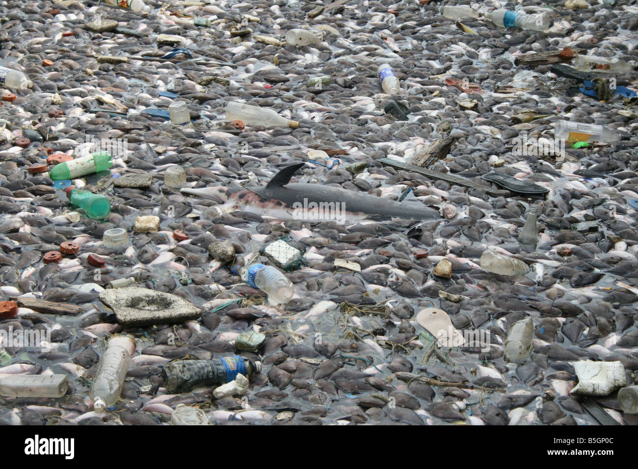 Fishes dying due to sea pllution and dumping of chemical waste by factories into the ocean - Stock Image