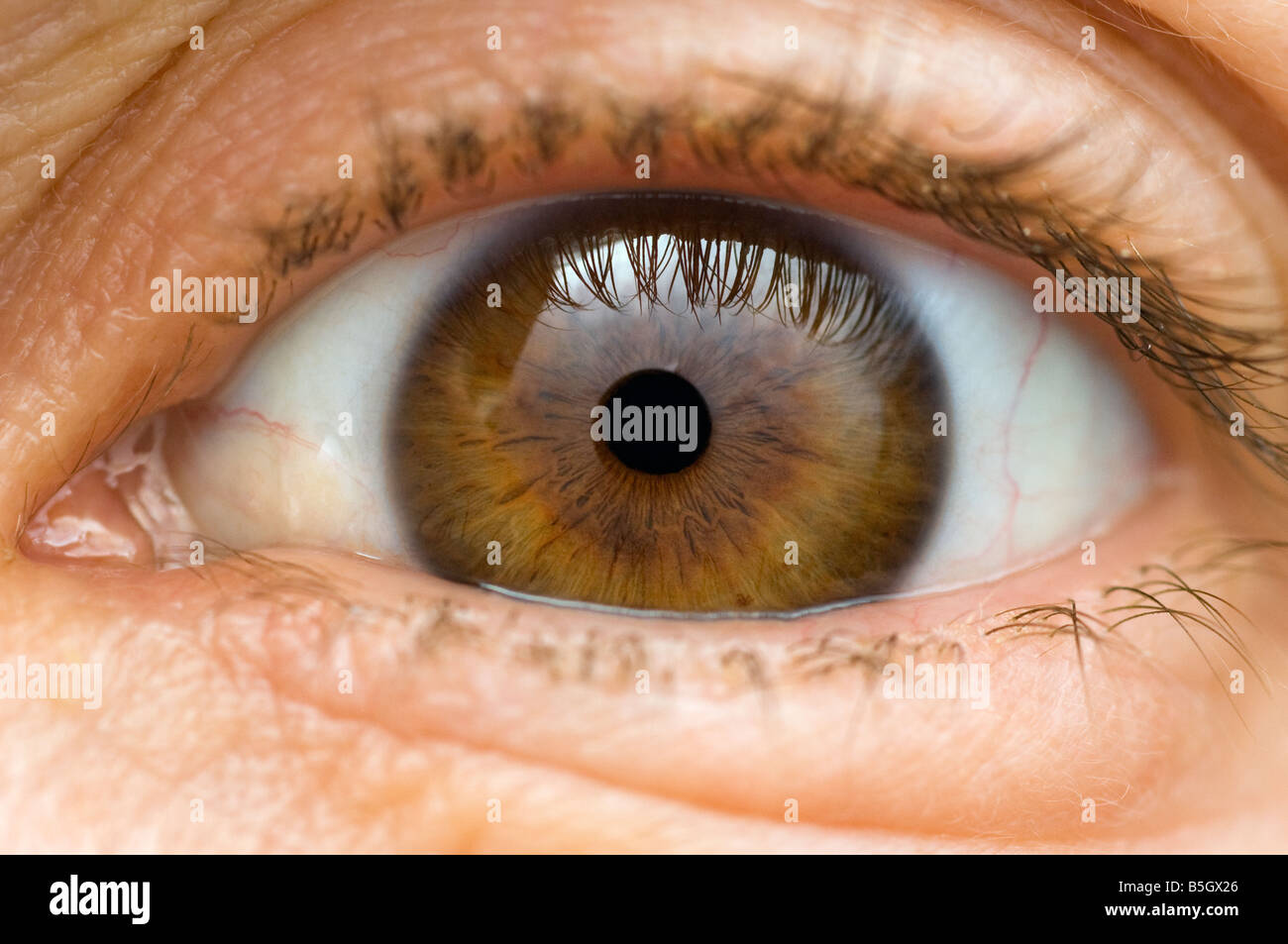 an eye close up - Stock Image