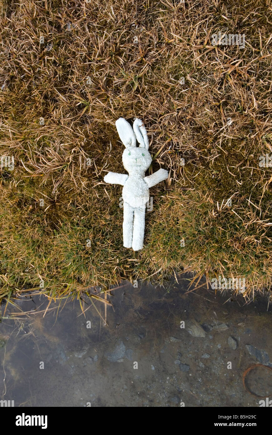 Abandoned child s toy rabbit laying on grass beside waters edge Abstract - Stock Image