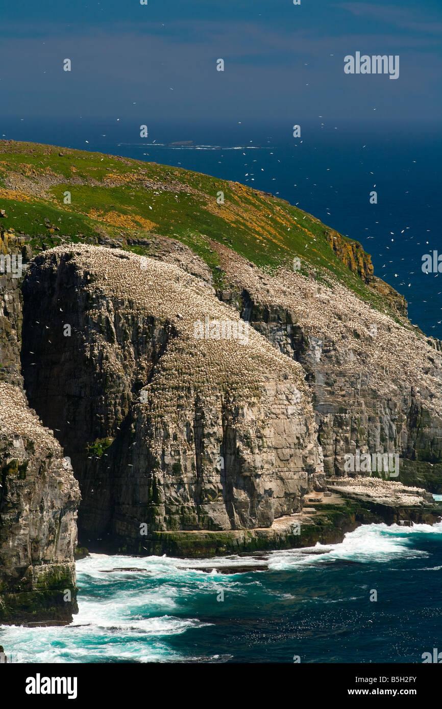 Cape St Mary's Ecological Reserve Newfoundland&Labrador Canada - Stock Image