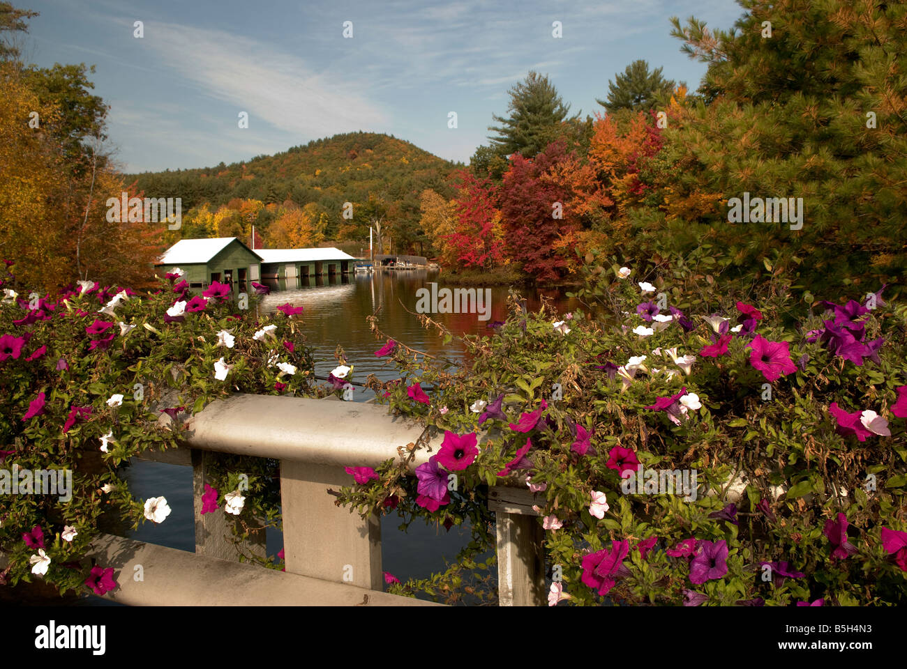 flowers fronting view of fall tree colors - Stock Image