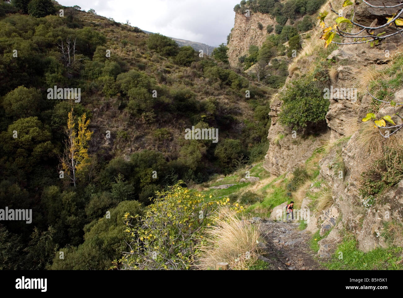 Trekker waking along trail in the green Poqueira valley Sierra Nevada mountains in southern Spain - Stock Image