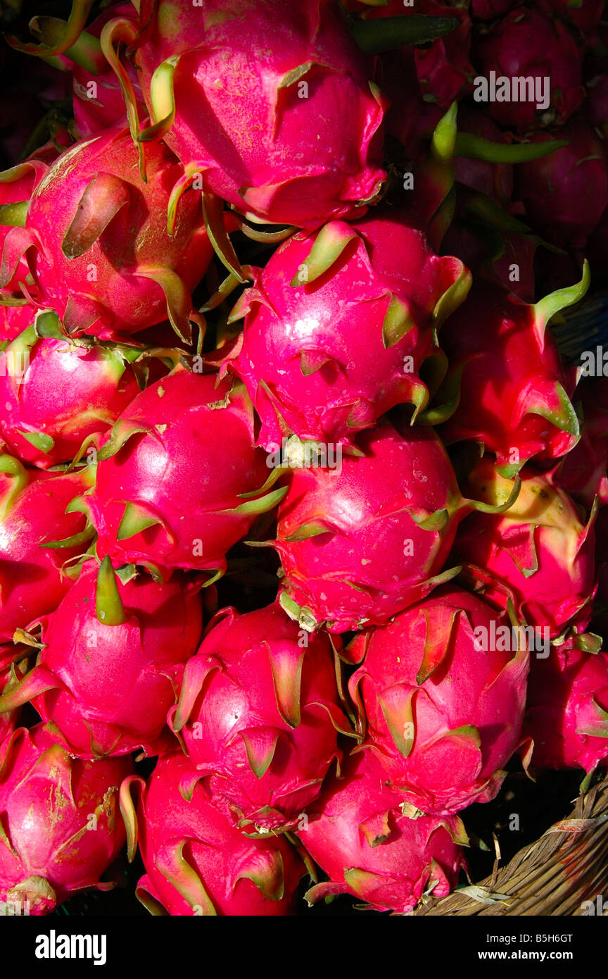 Red Dragon Fruits Pitaya Hylocereus undatus - Stock Image