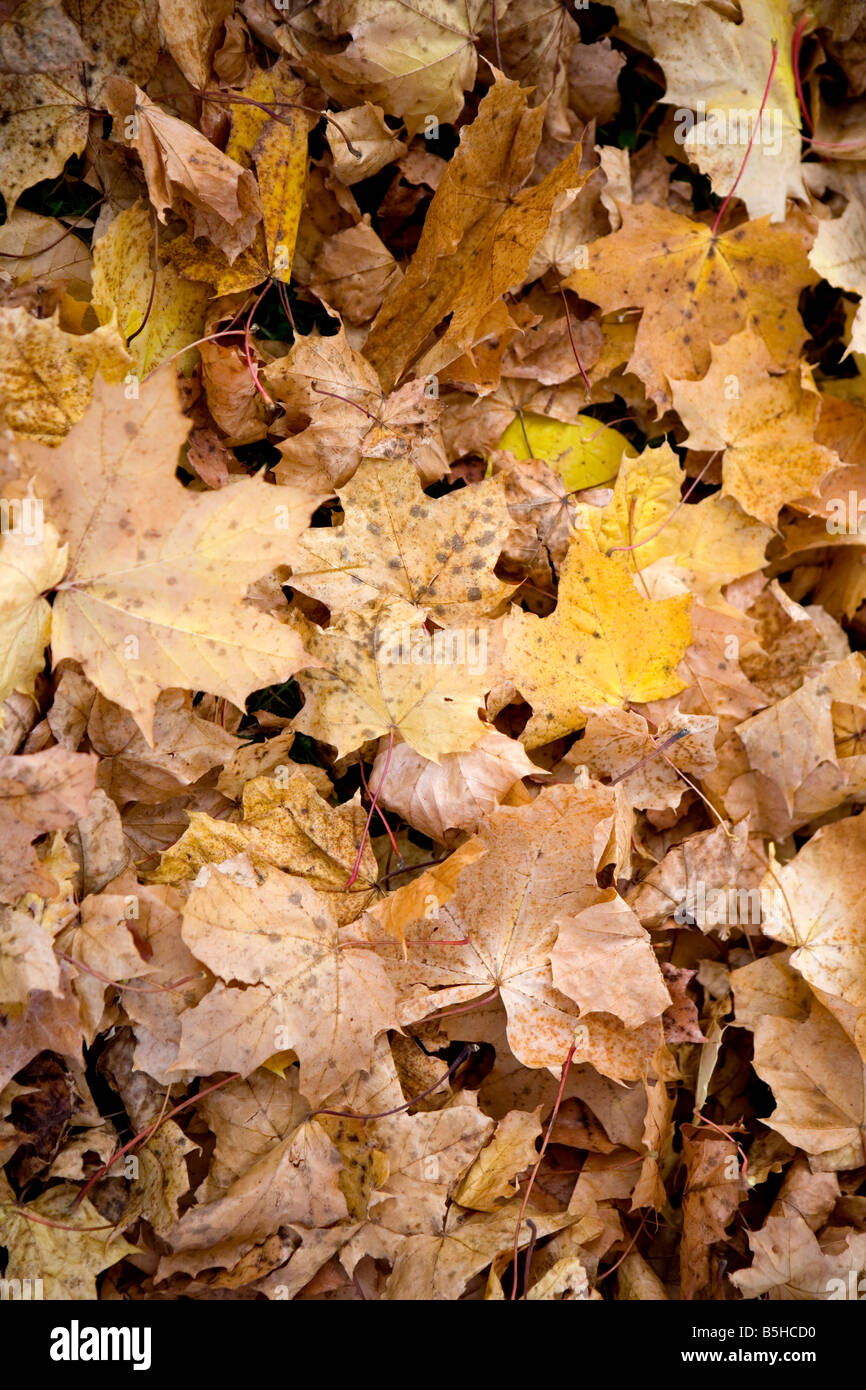 Herbstlaub am Boden, autumn leaves Stock Photo