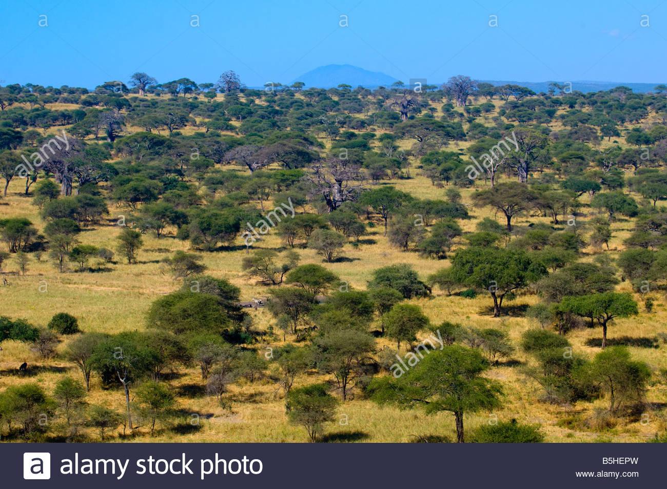 Tarangire National Park Tanzania - Stock Image