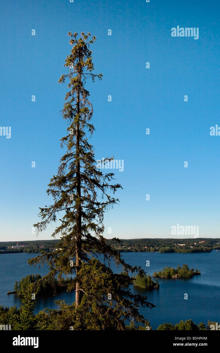 Tampere: Pyynikki Viewpoint: Lake Pyhäjärvi and Fir - Stock Image