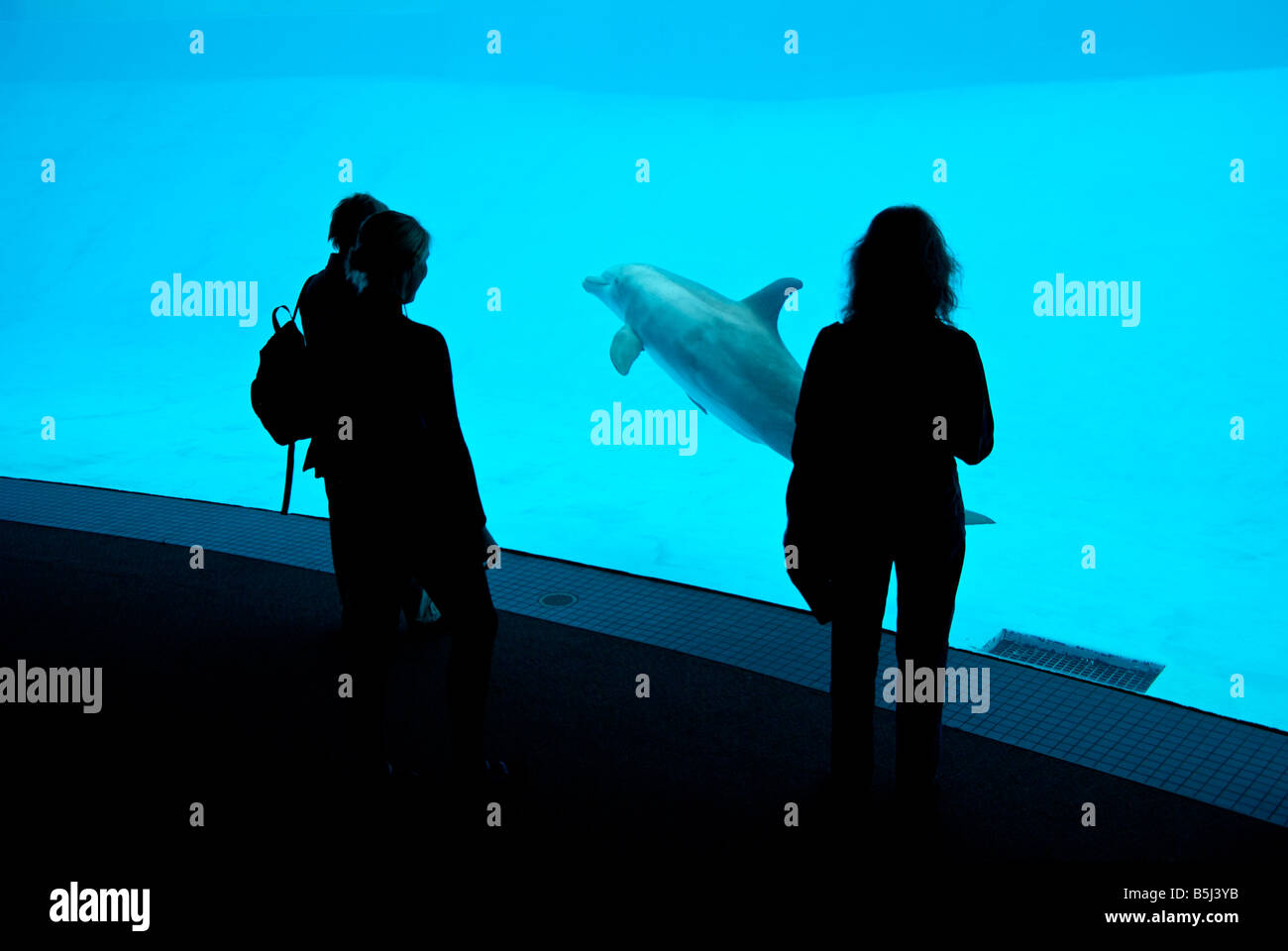 Silhouettes of three women watching Atlantic bottlenose dolphin from underwater viewing area at Texas State Aquarium - Stock Image