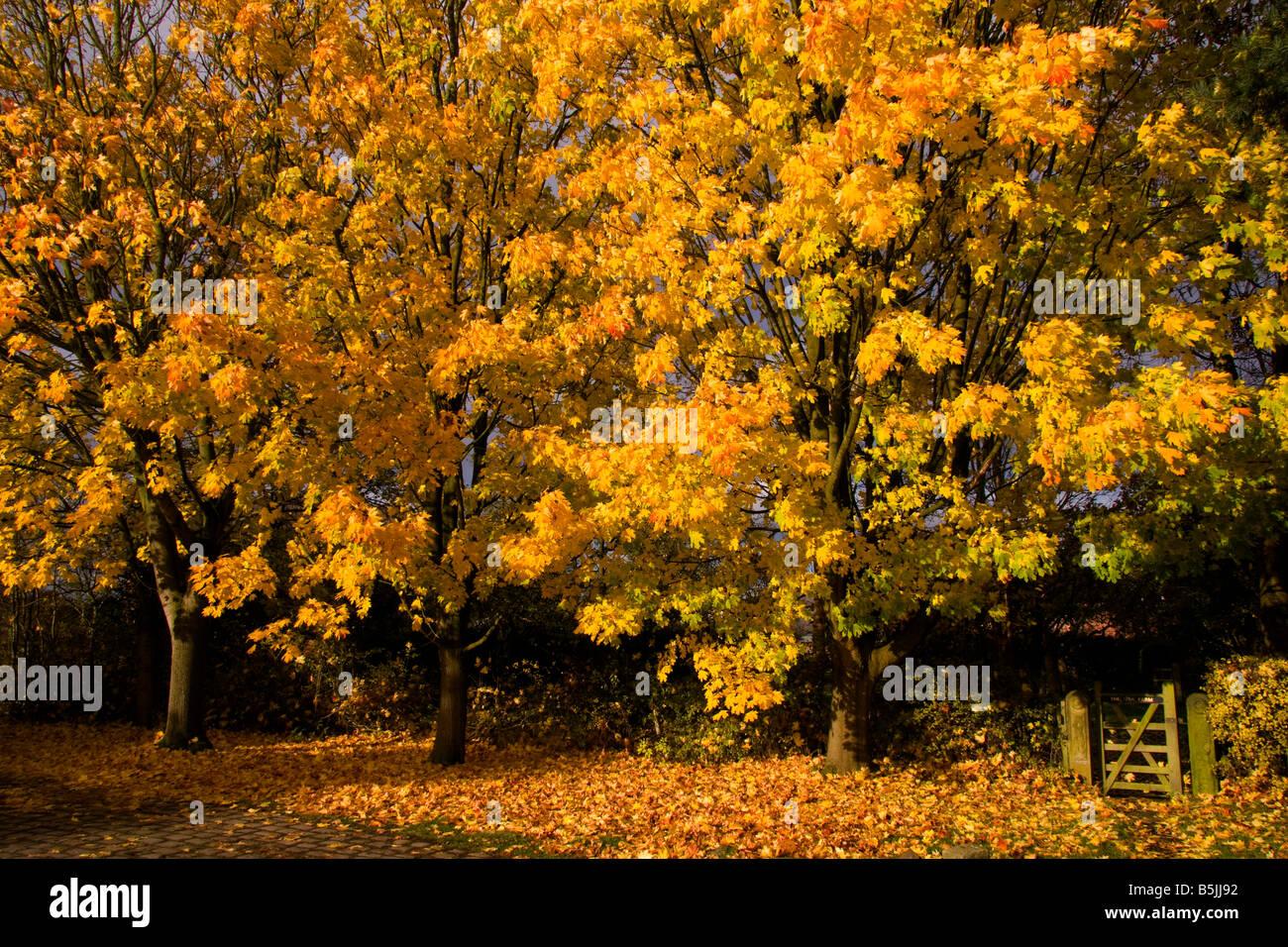 Autumn at Style, Cheshire, UK - Stock Image