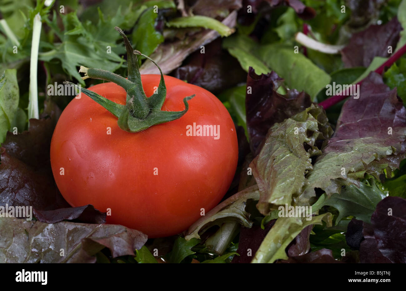 juicy fresh red tomato on a lettuce background - Stock Image