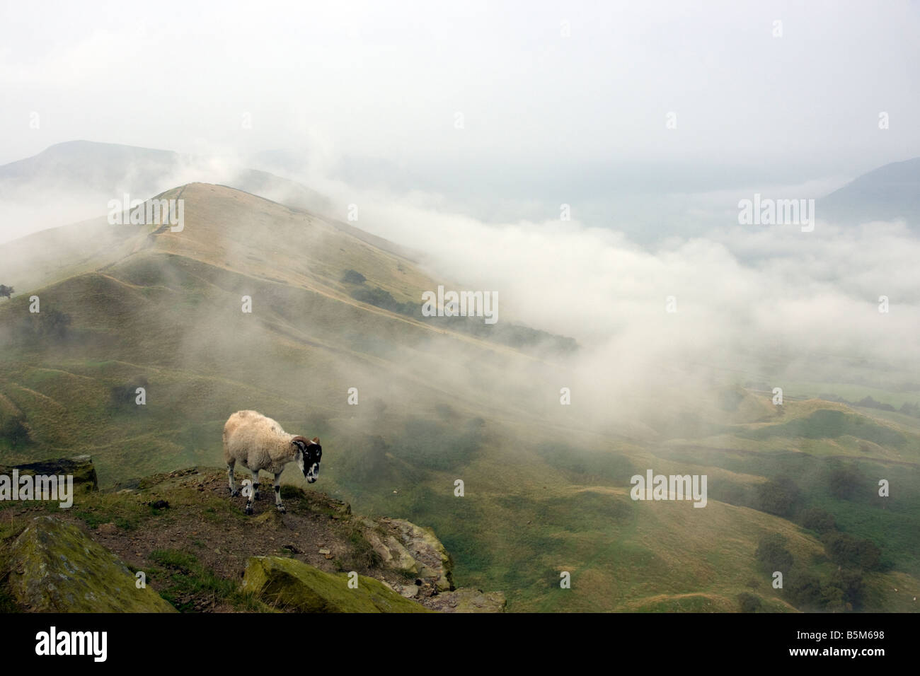sheep on the summit of back tor with mam tor ridge and the edale valley by early morning lighting showing low clouds - Stock Image