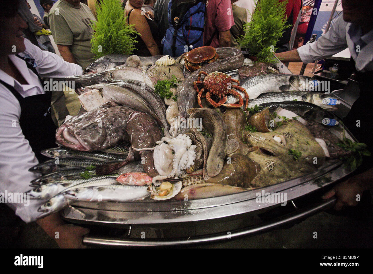 A tray of local fish on display at the Newlyn Fish Festival in Newlyn, near Penzance in Cornwall, the west of England. - Stock Image