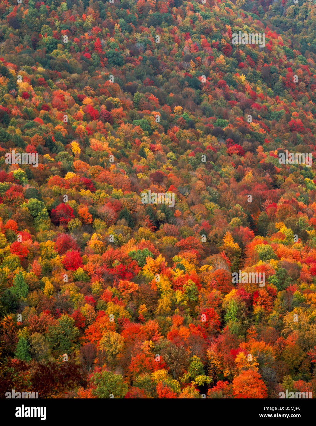 Autumn forest Worlds End State Park Pennsylvania Stock Photo