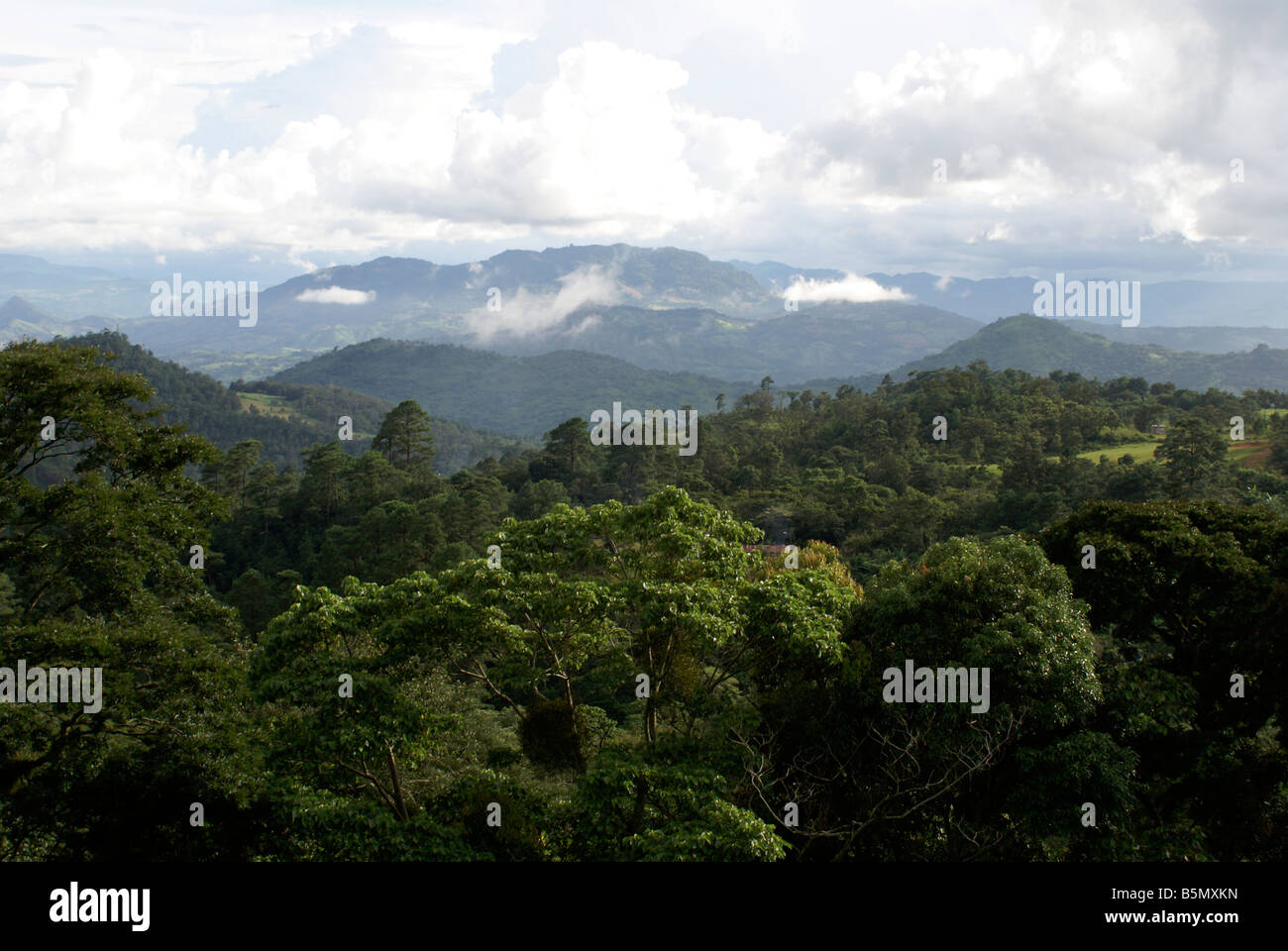 Forested mountains and cloud forest  near Matagalpa, Nicaragua Stock Photo
