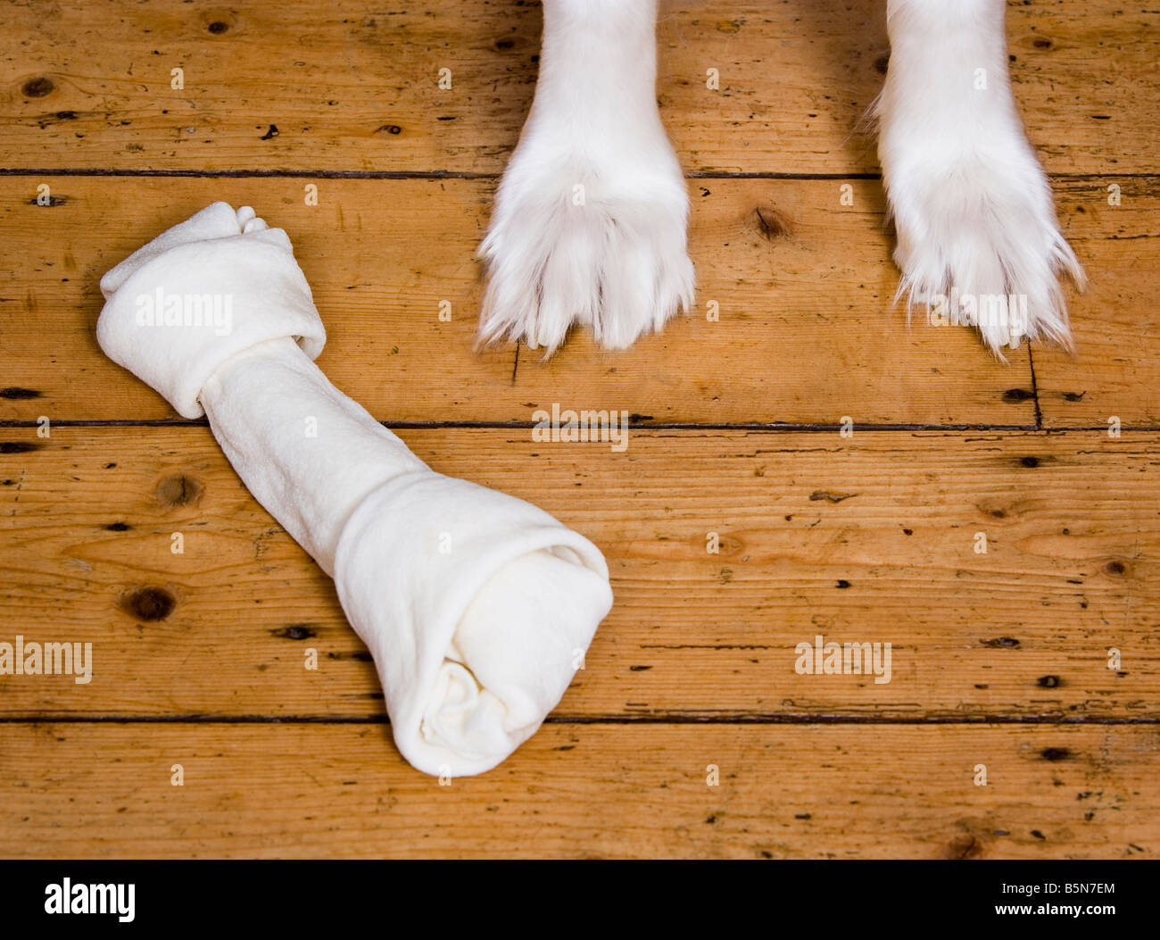 Feet of Borzoi and dog chew high angle view - Stock Image