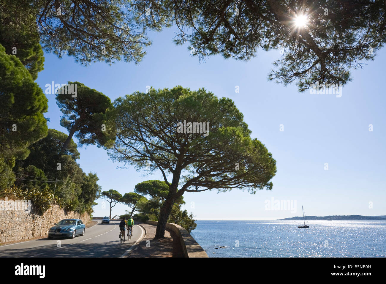 Stone pines stand along the coastel road 'Corniche' at the Cote d'Azur / Provence / Southern France - Stock Image