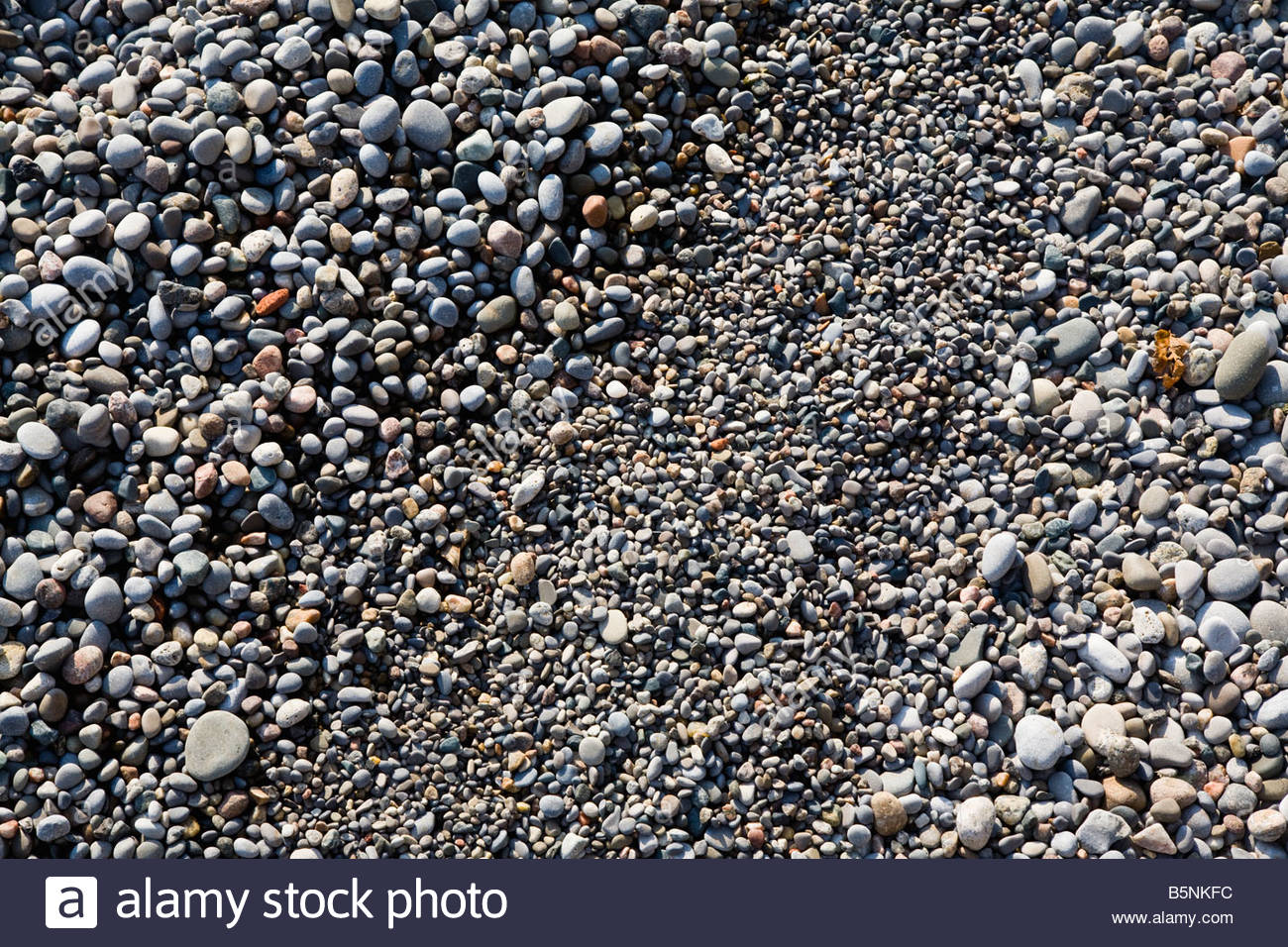 Shingle Beach of small rounded pebbles at the base of the Scarborough Bluffs in Toronto Ontario Canada - Stock Image