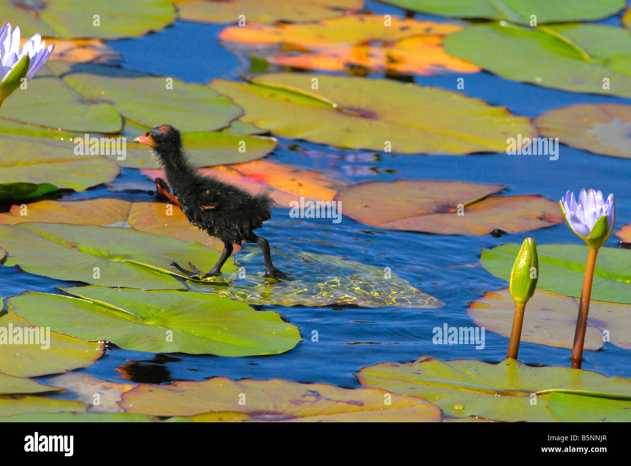 Lily Pad Baby Stock Photos & Lily Pad Baby Stock Images - Alamy