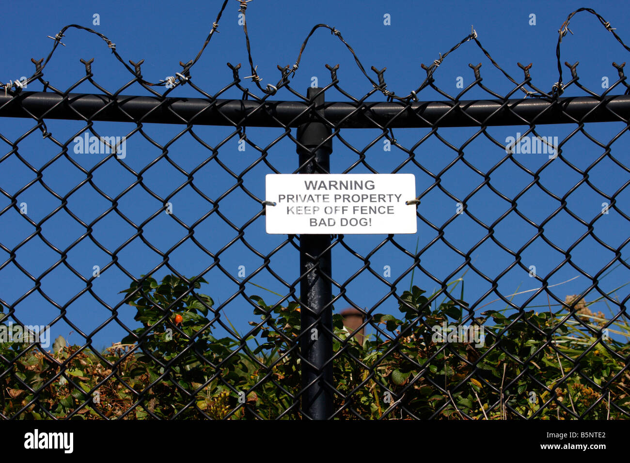 Dog And Barbed Wire Stock Photos & Dog And Barbed Wire Stock Images ...