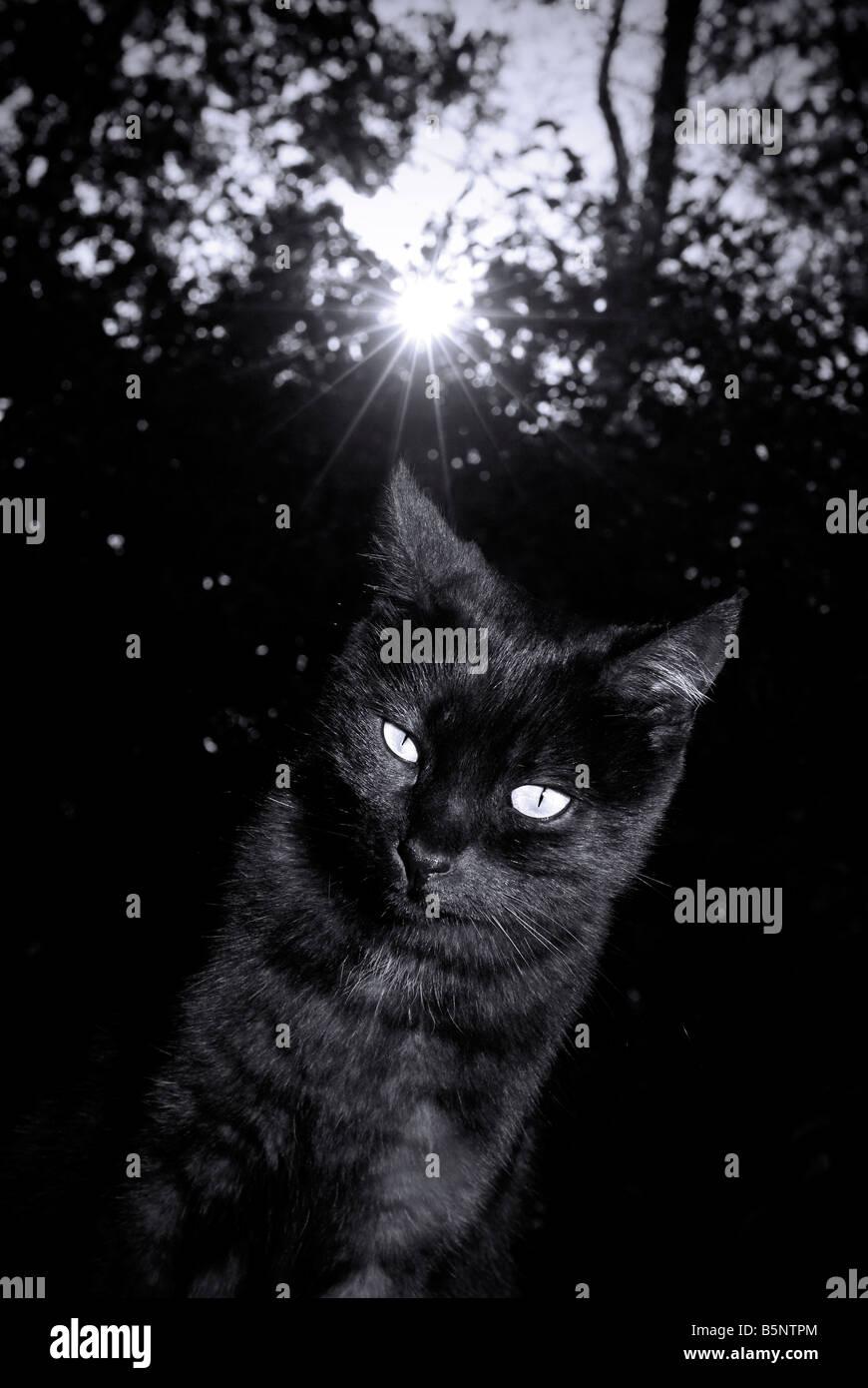 Black cat at sunset - Stock Image