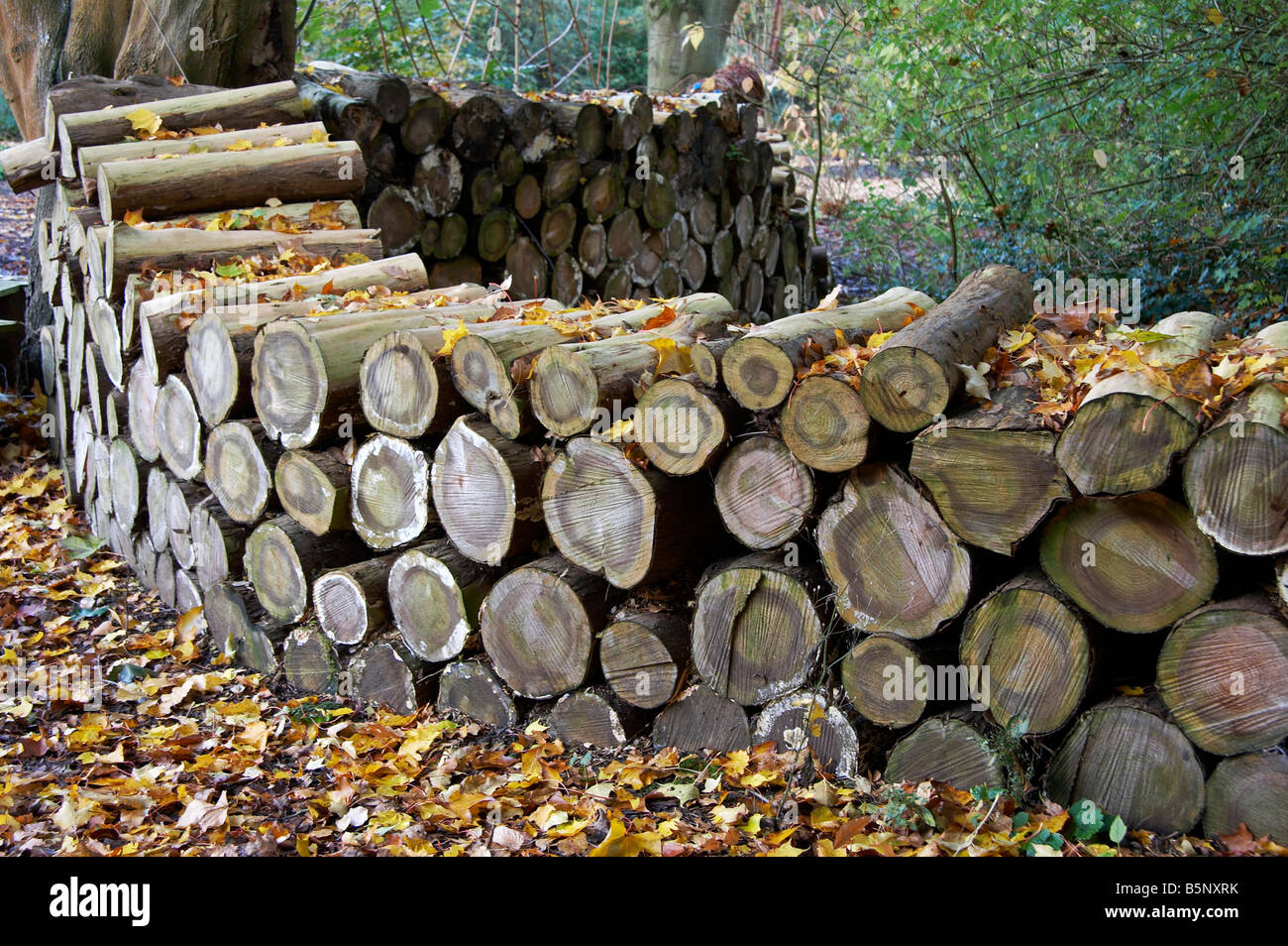 stack of logs at Ness Gardens, England - Stock Image
