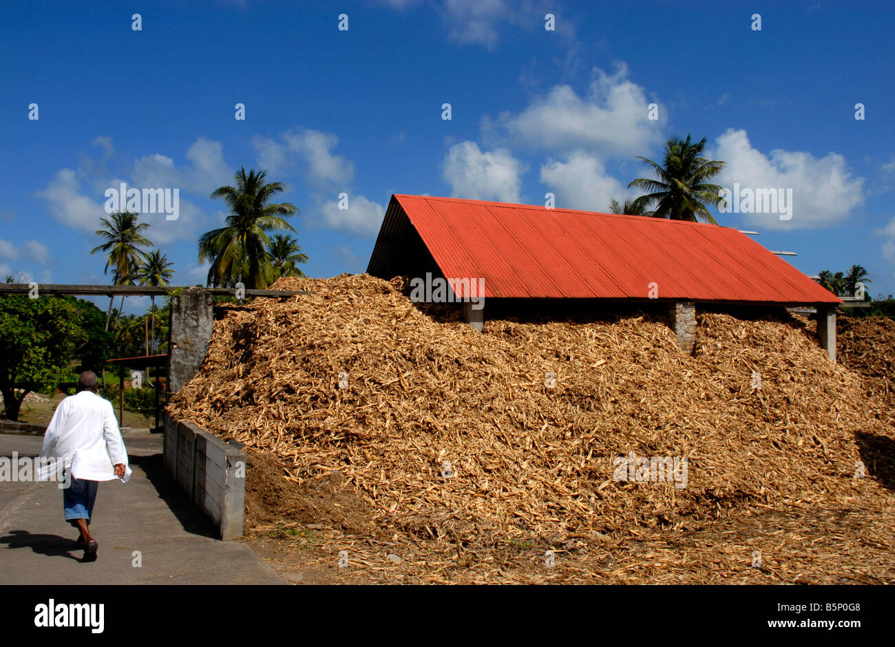 Crushed sugar cane is reused as fuel for part of the distillation process or as fertiliser, Grenada in the 'West - Stock Image