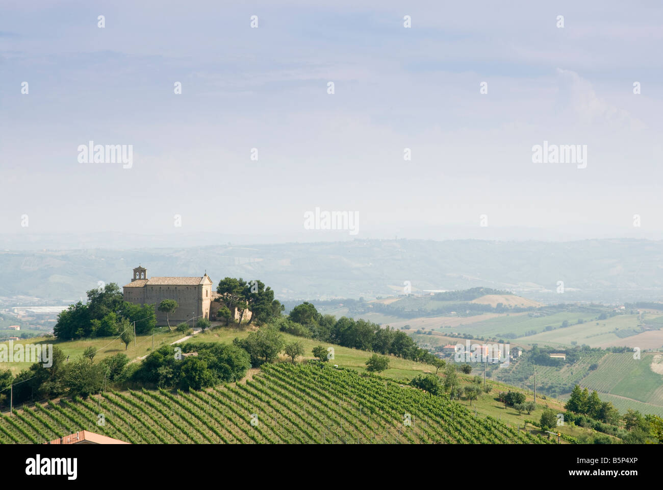 Church with olive trees in Le Marche - Stock Image