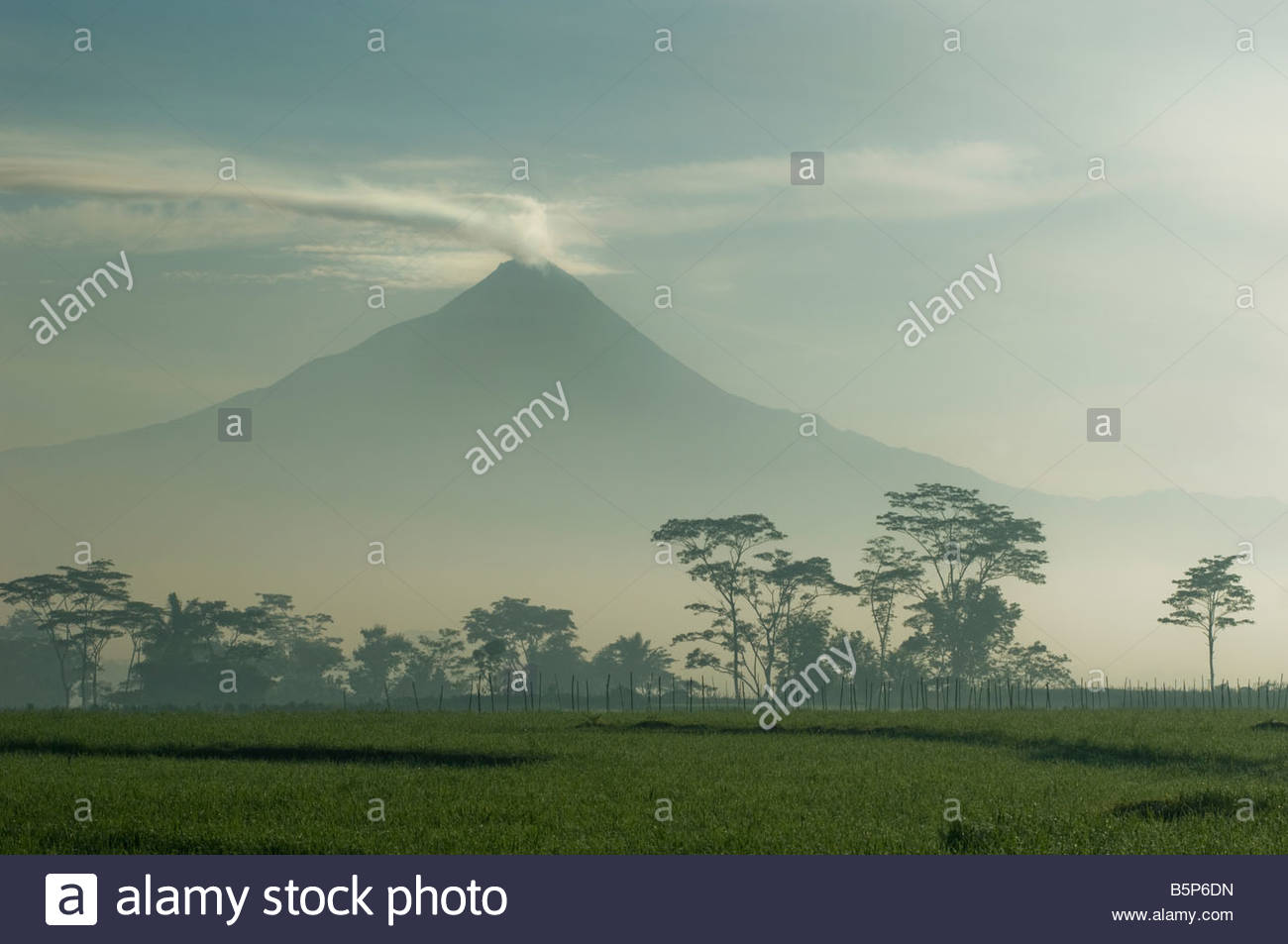 Mount Merapi view in front of a paddy field in Magelang the nearest town to Borobudur - Stock Image