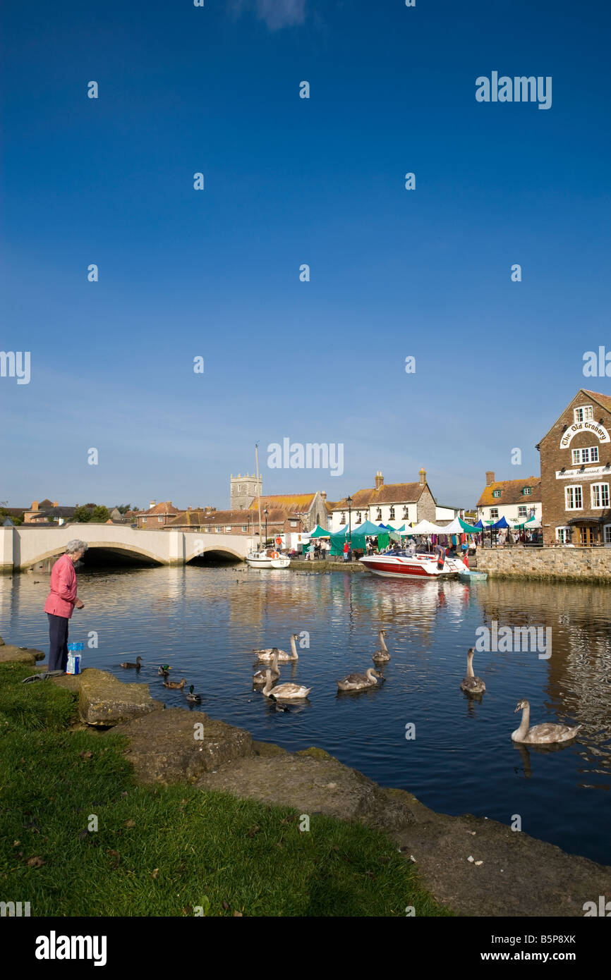 Relaxing by the Quay alongside the River Frome at Wareham Dorset with person not identifiable feeding swans, with - Stock Image