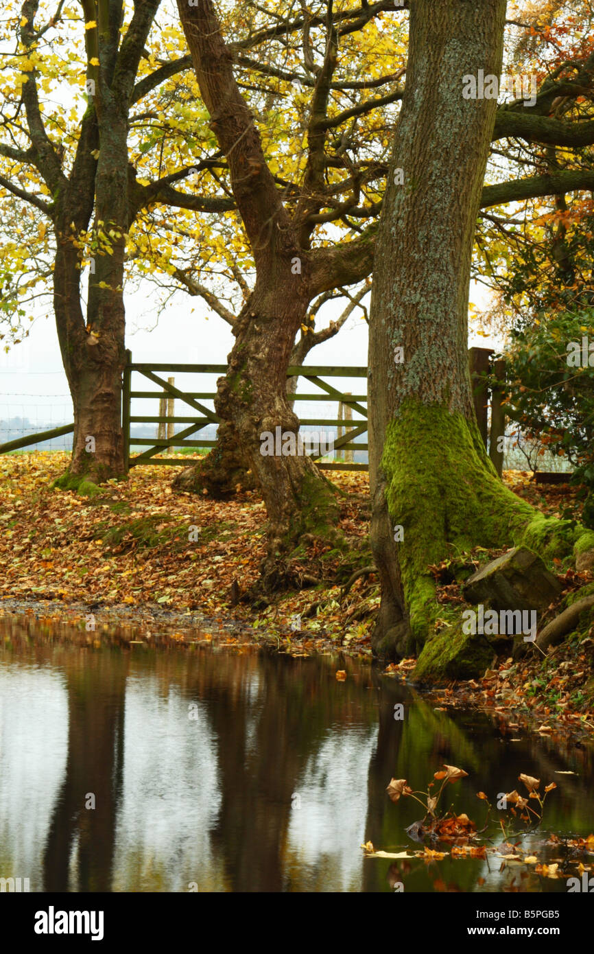 A countryside pond near Bledlow Ridge, Chiltern Hills, England - Stock Image