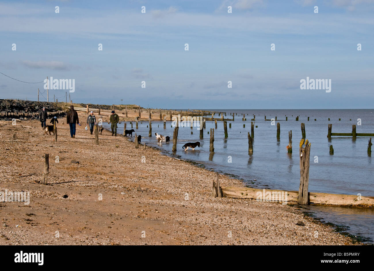 People walking their dogs on the beach at Leysdown on Sea on the Isle of Sheppey in Kent. - Stock Image