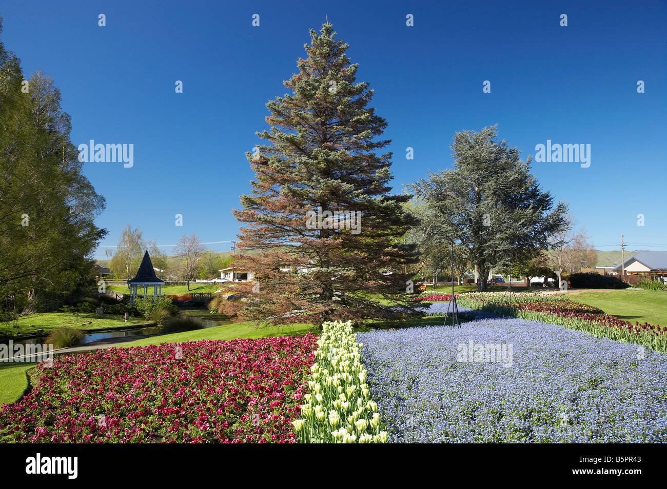 Spring Flowers Pollard Park Blenheim Marlborough South Island New Zealand - Stock Image