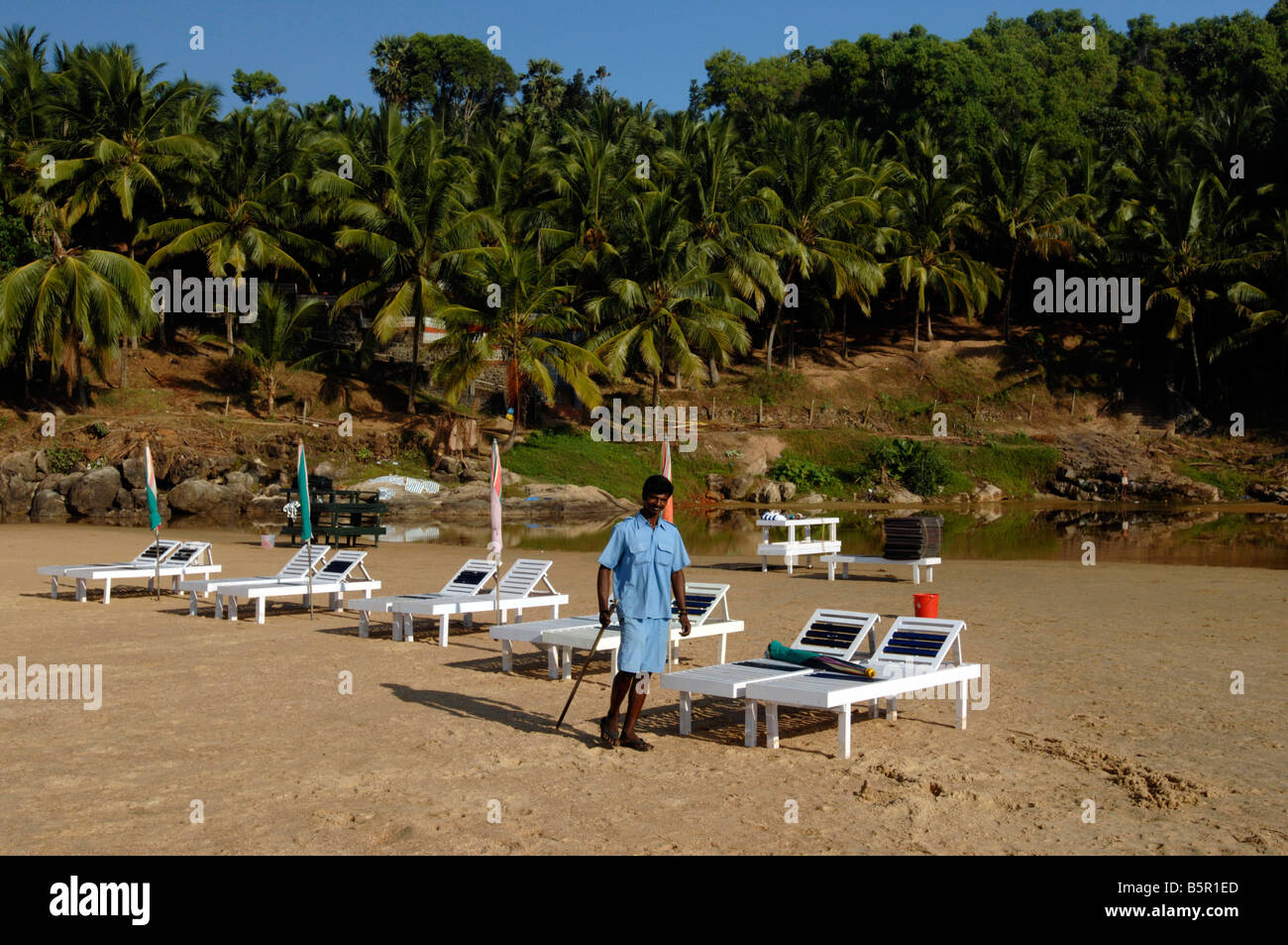 A hotel member of staff prepares loungers for tourists staying in the resort amongst the coconut trees at Chowara - Stock Image