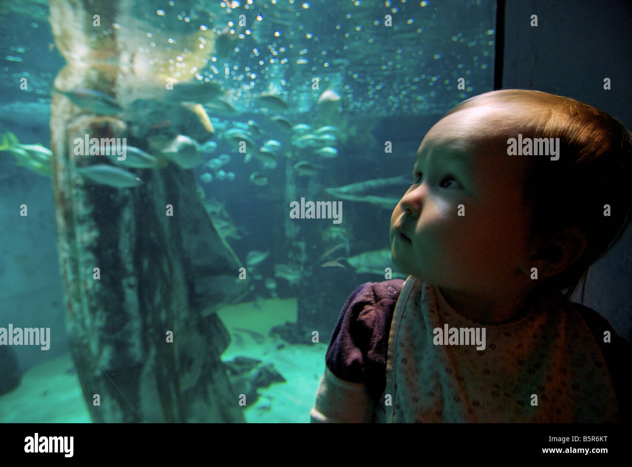 Young child at London Aquarium, London, England - Stock Image