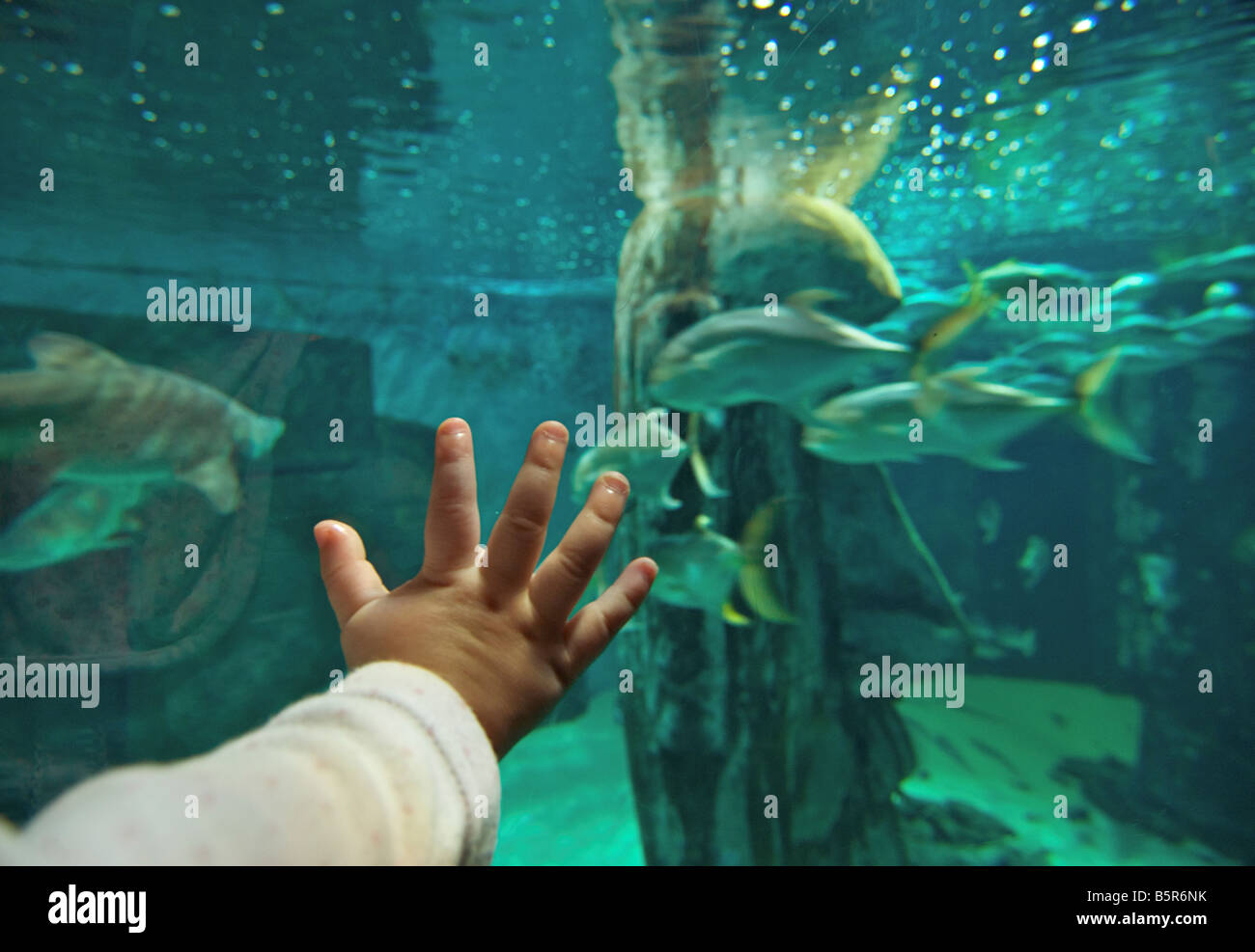 Young child at London Aquarium, Londn - Stock Image