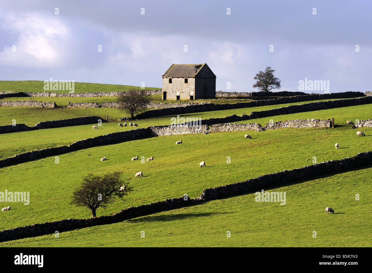Dry stone walls and field barn, Wetton Low, Peak District National Park, England - Stock Image