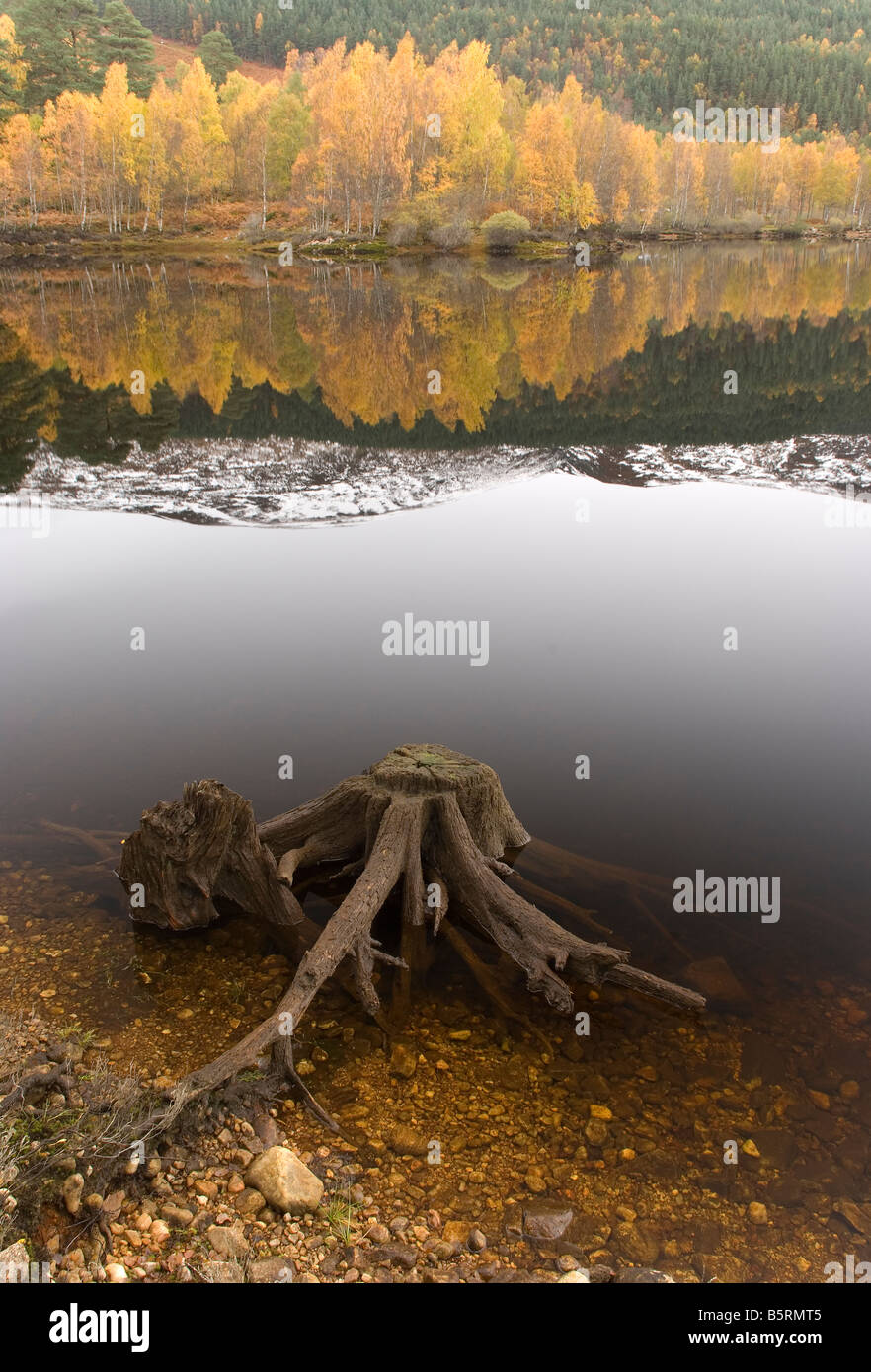 Autumn in Glen Affric Scotland UK - Stock Image