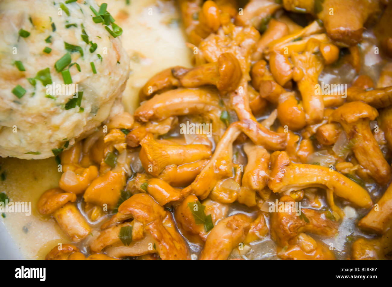 Canederli (Knödel) with chanterelles (finferli) mushrooms. Typical dish from the South Tyrol, Trentino Alto - Stock Image