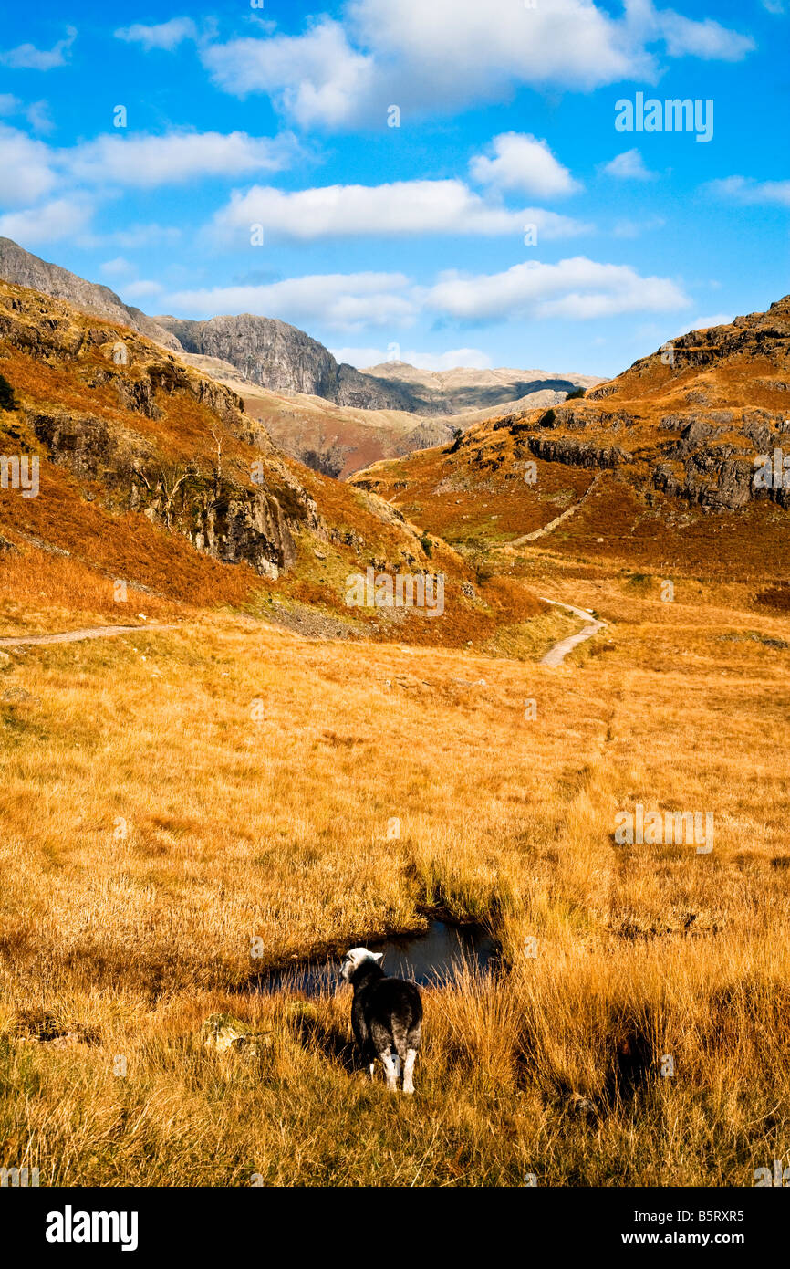 Autumn landscape with bracken covered hillside, path and sheep in the Lake District National Park, Cumbria, England, - Stock Image