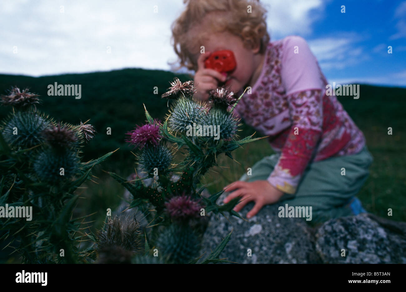 Young girl looking at an Emperor moth caterpillar (Saturnia pavonia) with toy camera, Grimsay, Outer Hebrides, Scotland, - Stock Image