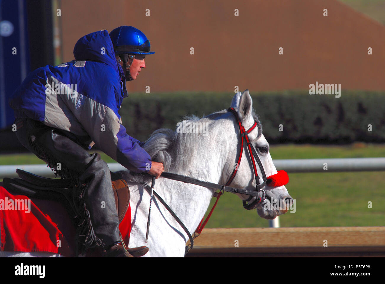 Jockey atop a horse after finishing a workout Stock Photo