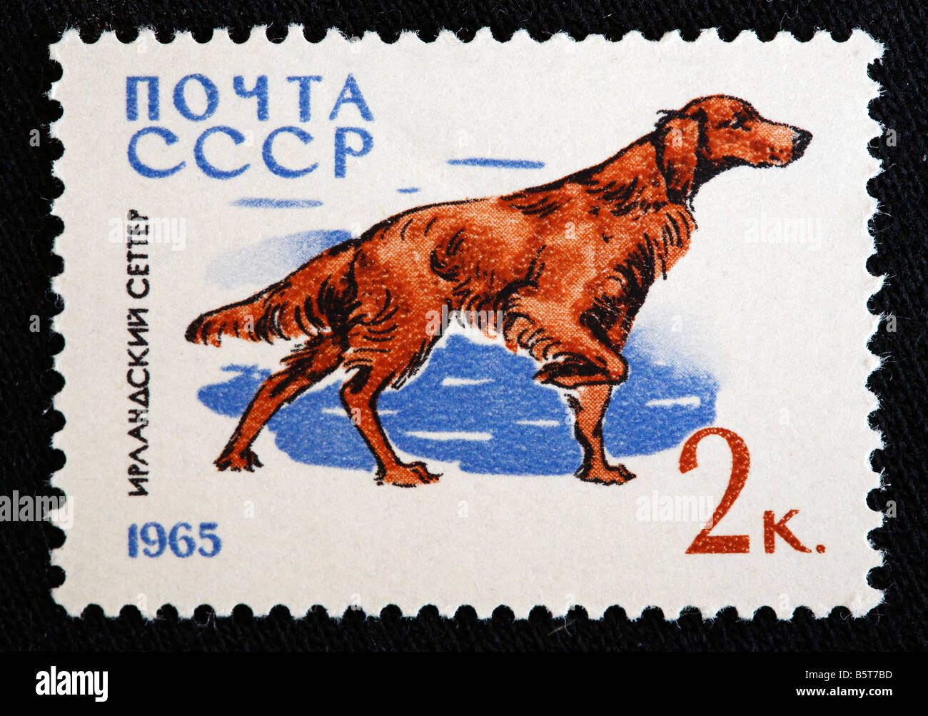 Irish Setter, Red Setter, postage stamp, USSR (Russia), 1965 - Stock Image