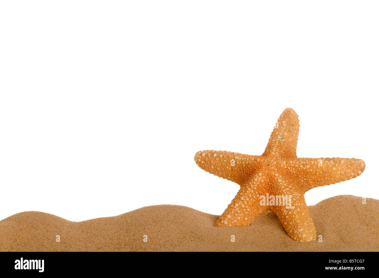 Starfish resting in sand lower frame with empty space above for text ...