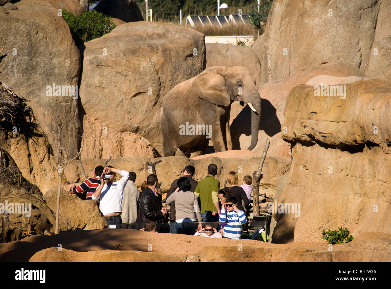 People looking at an elephant in enclosure inside the Biopark zoo which opened in the city of Valencia in 2008 - Stock Image