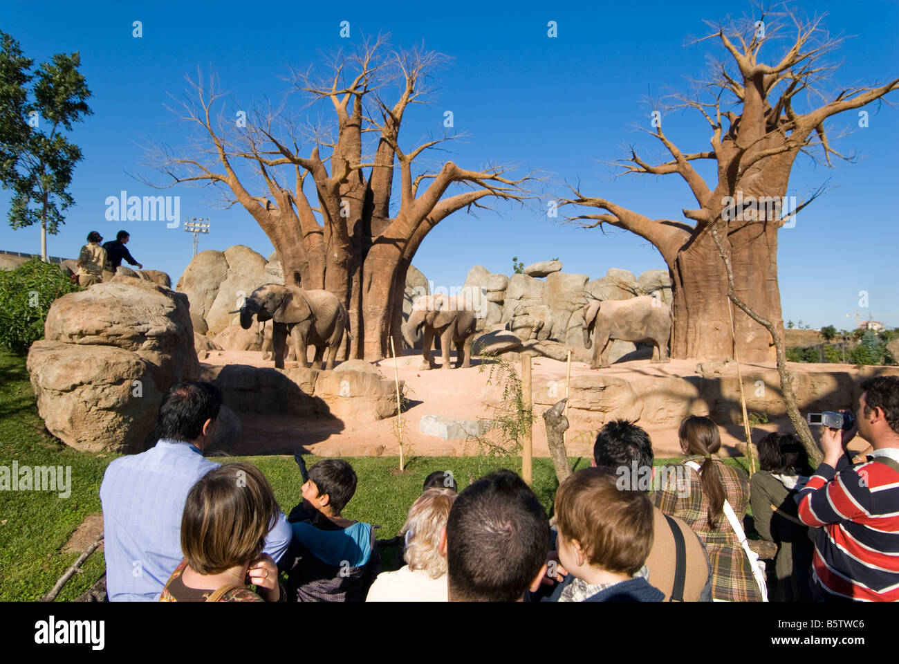 People looking at elephants in enclosure inside the Biopark zoo which opened in the city of Valencia in 2008 - Stock Image
