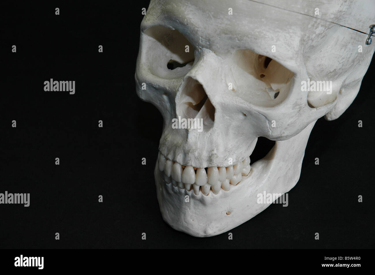 Human skull bone used by forensic medical students at university - Stock Image